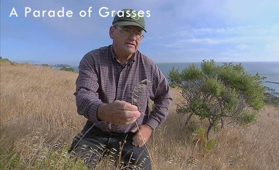 A Parade of Grasses