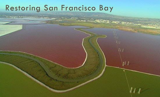 Restoring San Francisco Bay