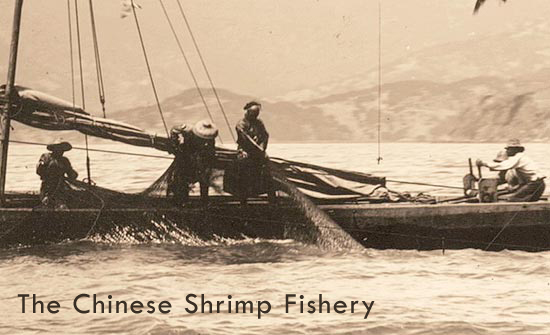 The Chinese Shrimp Fishery