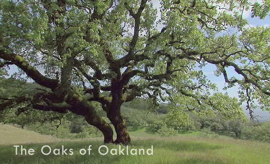The Oaks of Oakland