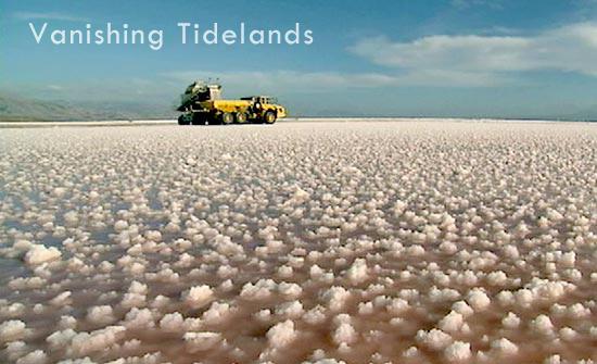 Vanishing Tidelands